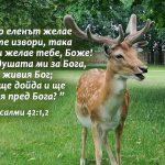 WEB - Psalmi 42-1-2 - Copy