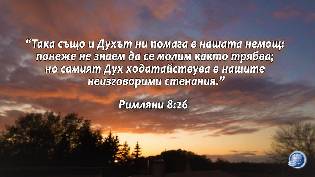 Rimlqni8-26
