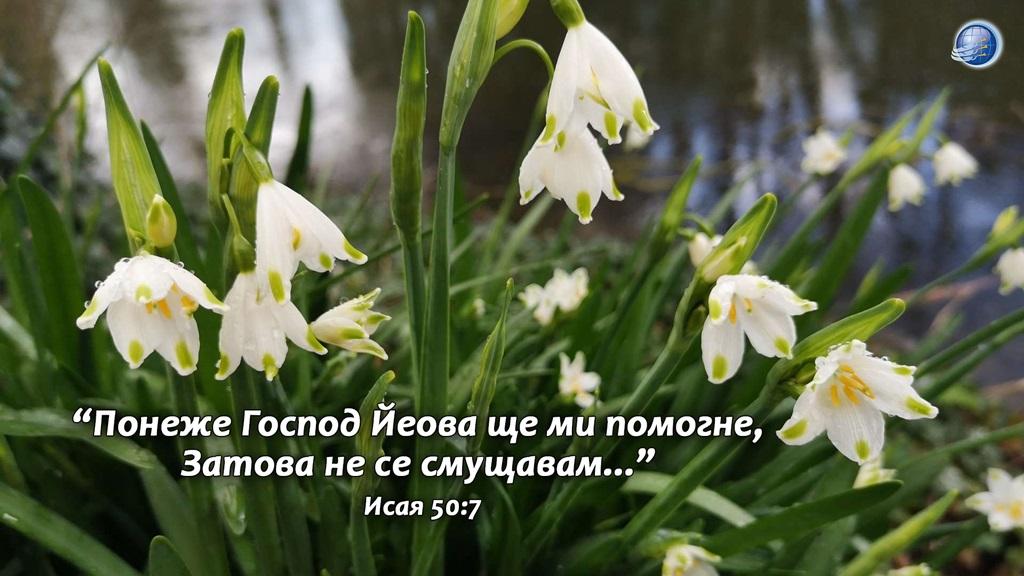 Isaq50-7 - Copy